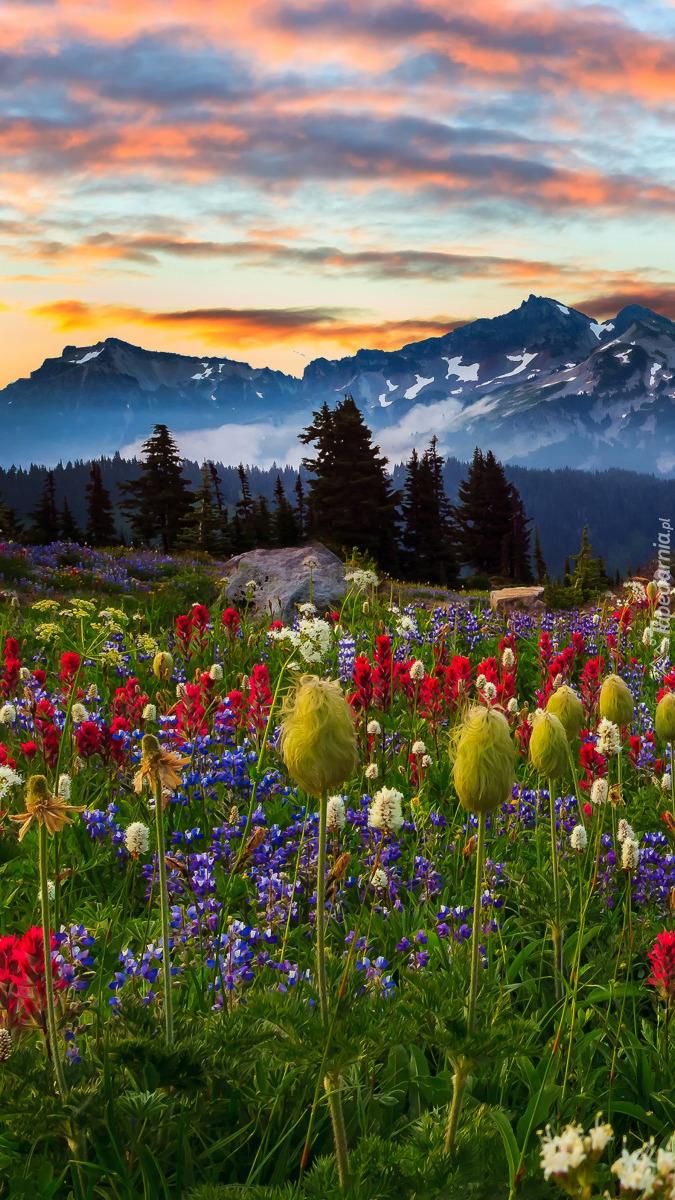 Łąka z widokiem na góry