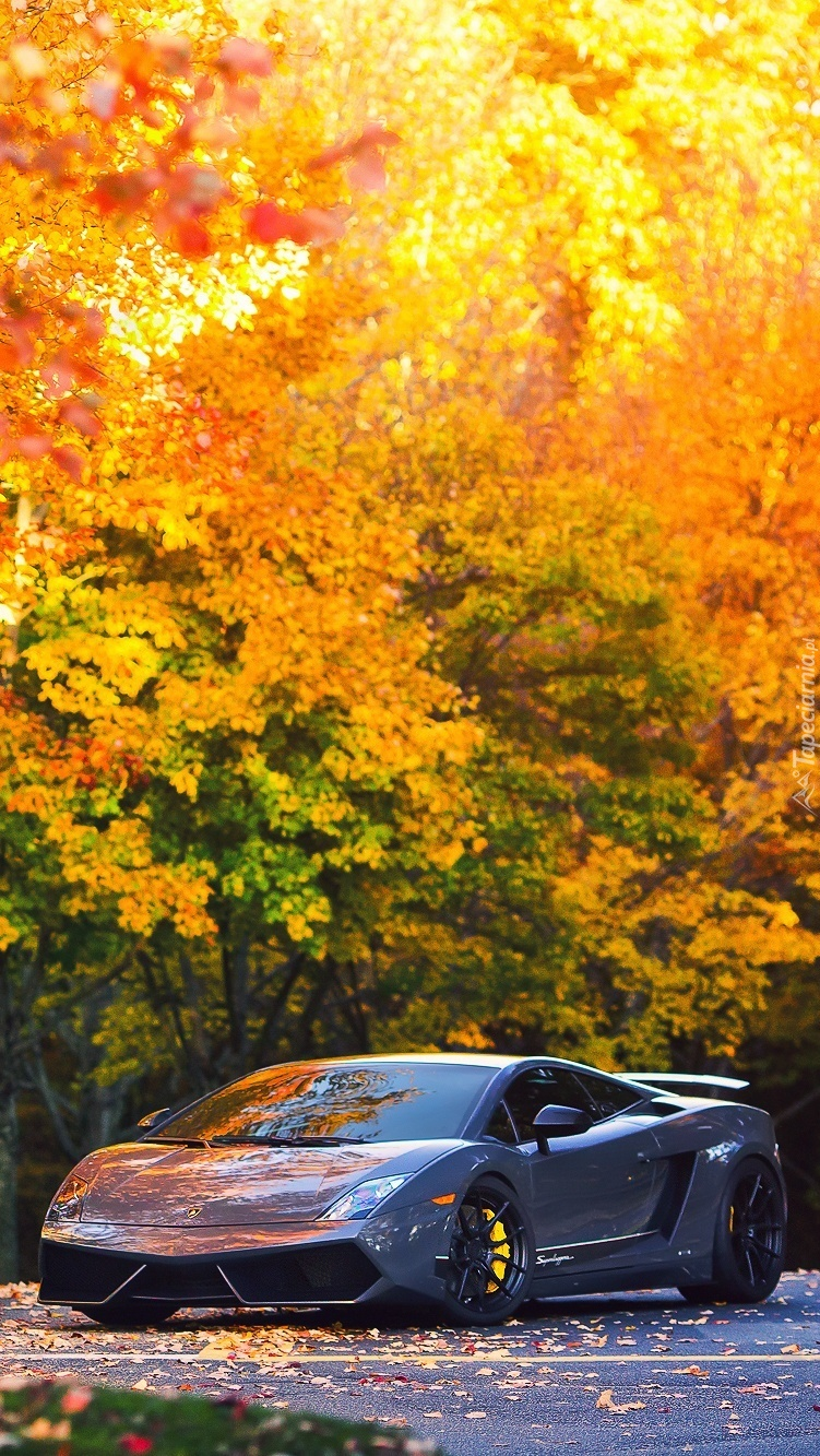 Lamborghini w jesiennym klimacie