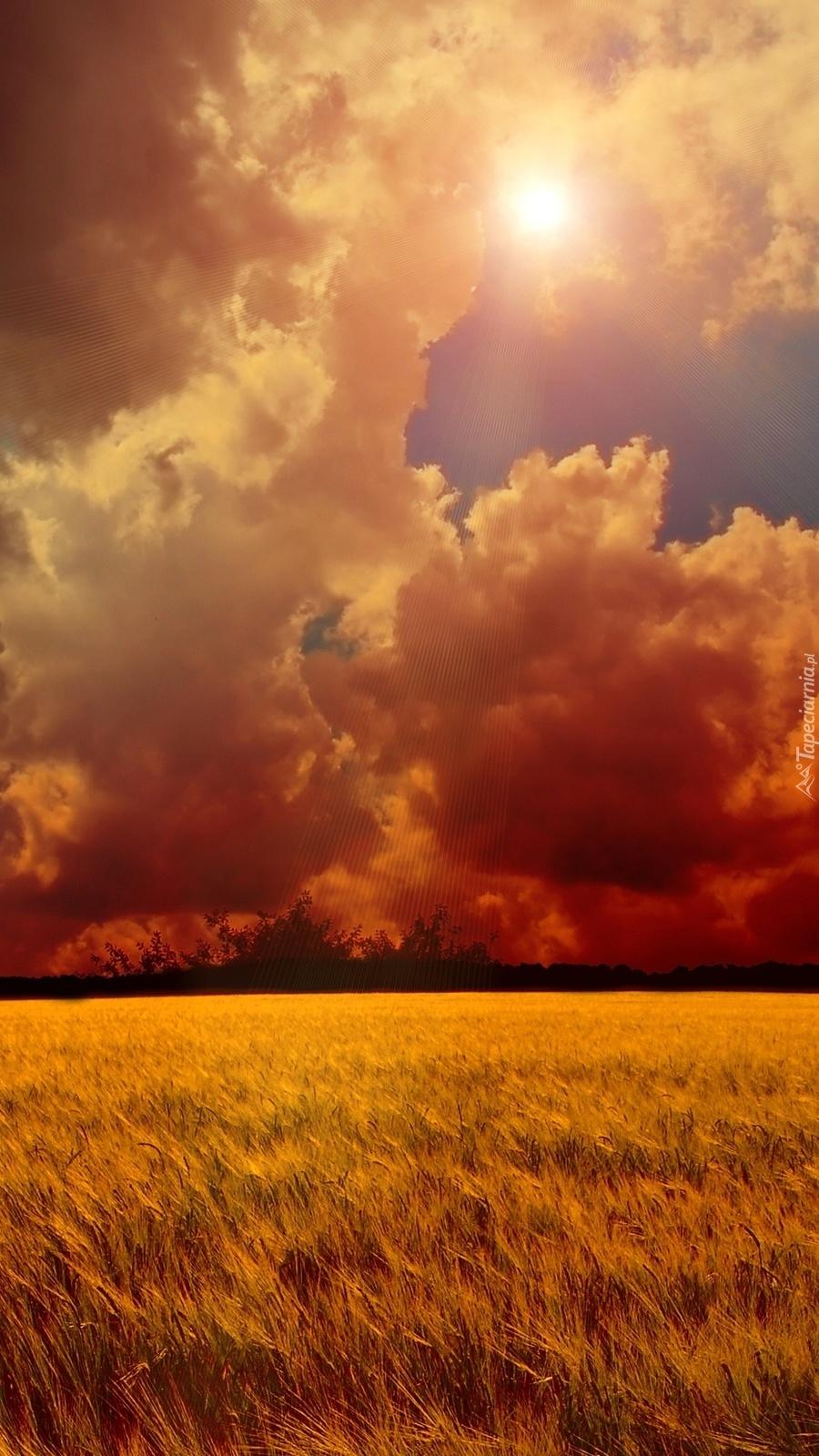 Łany zboża pod chmurami