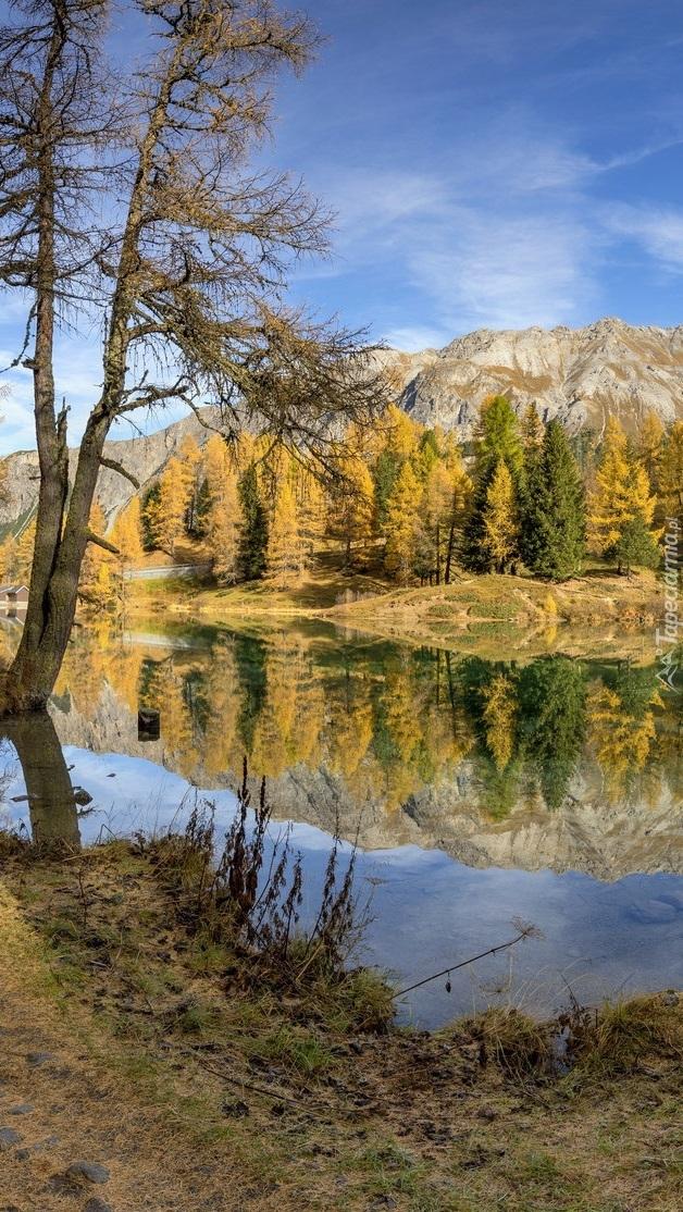 Las dookoła jeziora