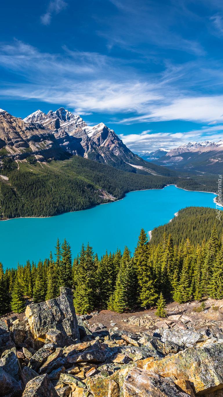 Las i góry wokół jeziora Peyto w Kanadzie