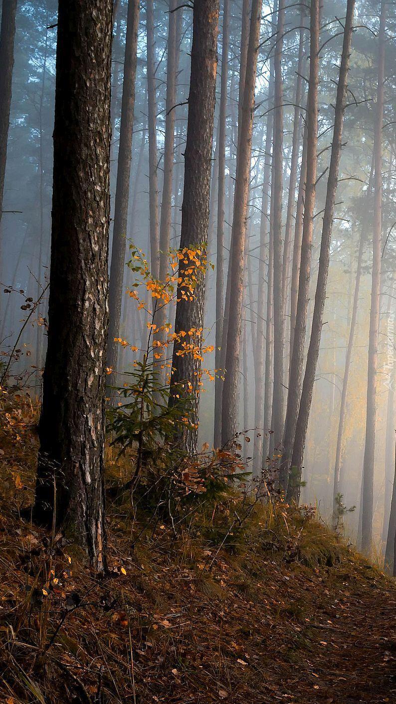 Las jesienią o poranku