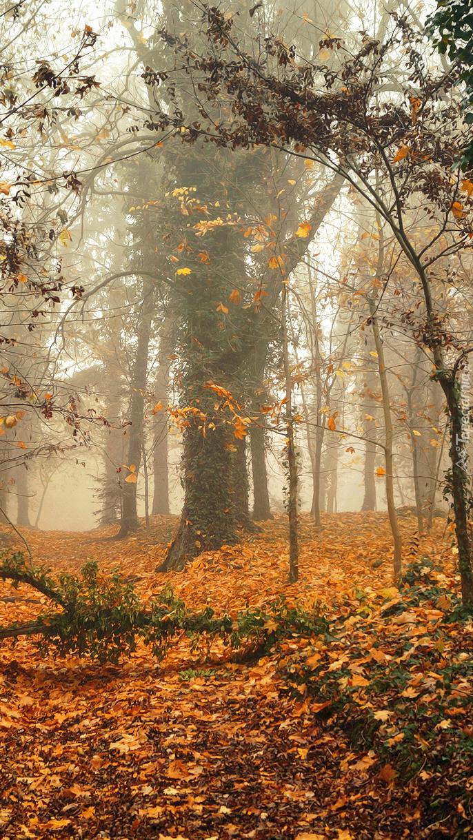 Las jesienny