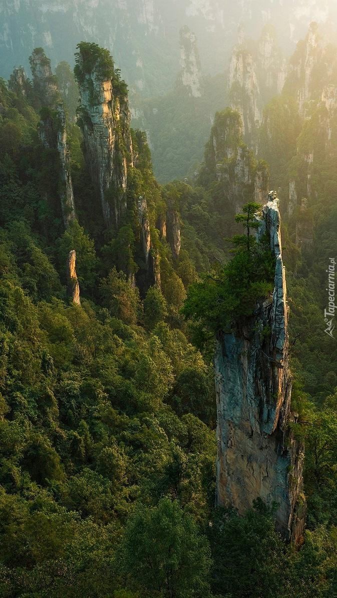 Las na skałach w Zhangjiajie National Forest Park