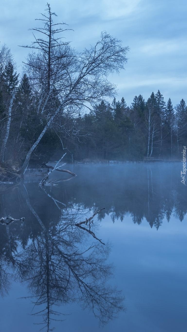 Las nad brzegiem rzeki we mgle