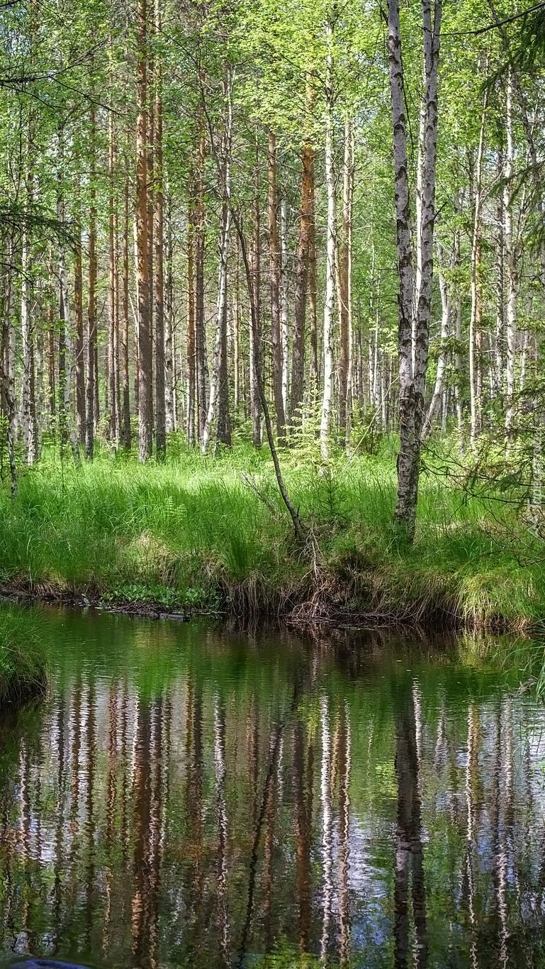 Las nad rzeką