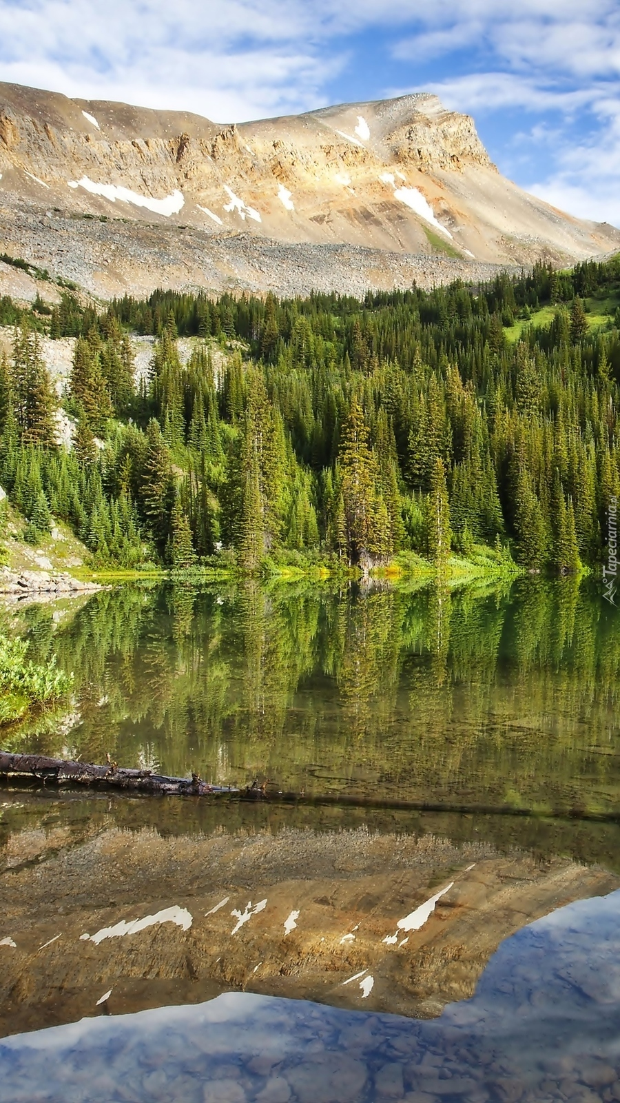 Las odbity w górskim jeziorze