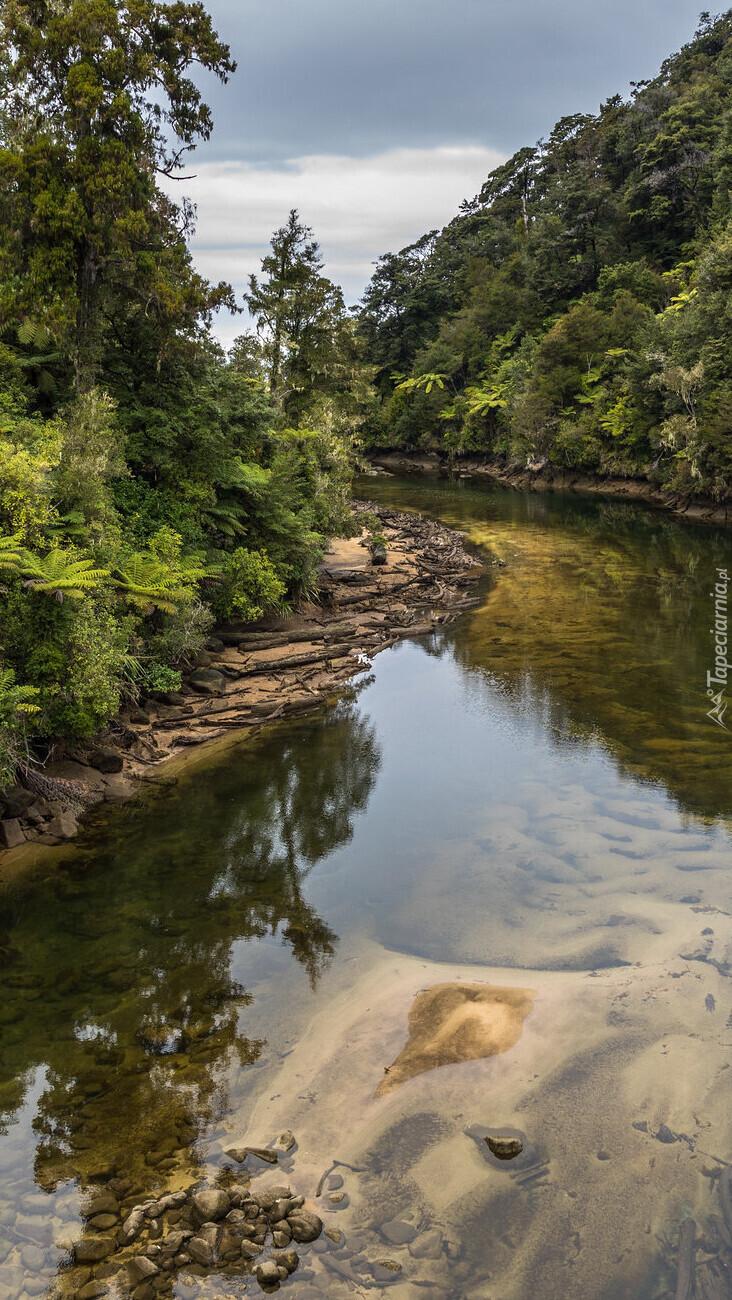 Las po obu stronach rzeki