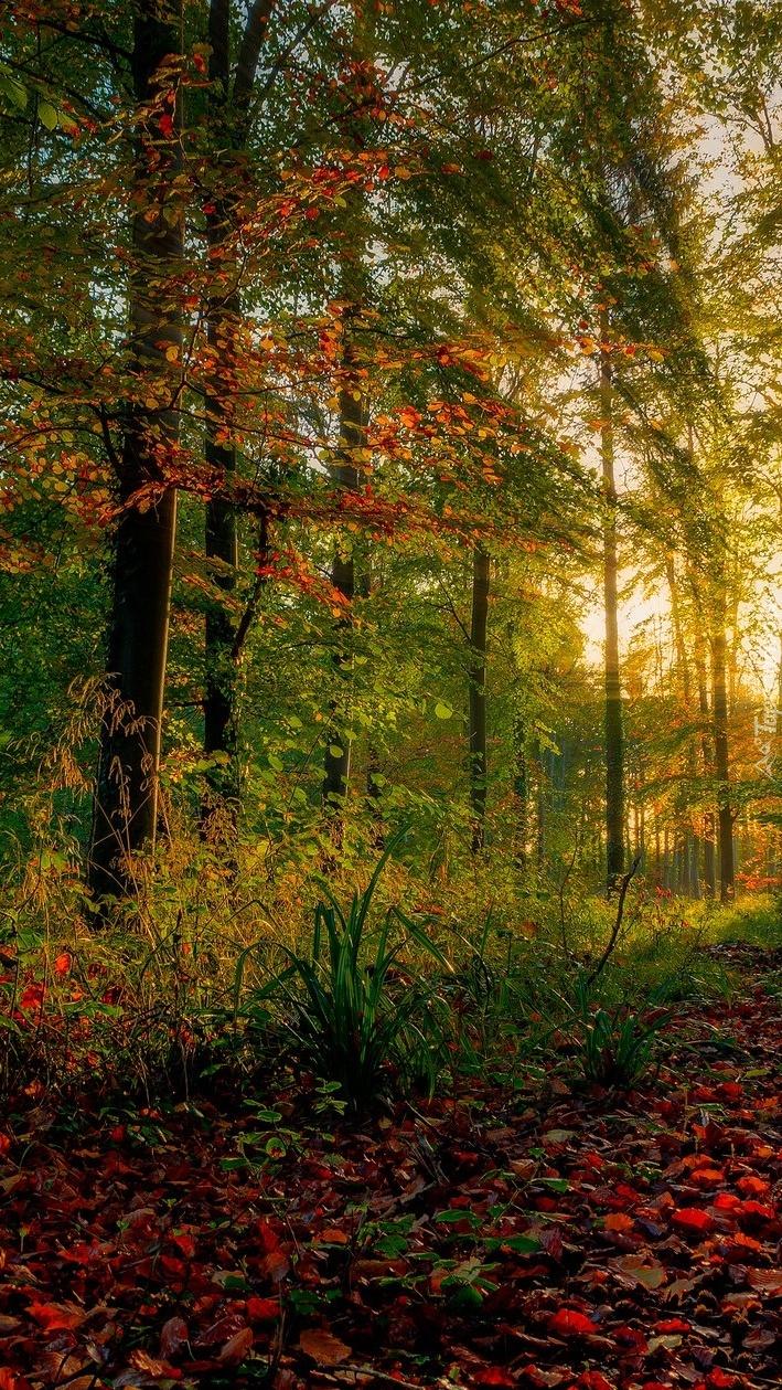Las rozświetlony słońcem