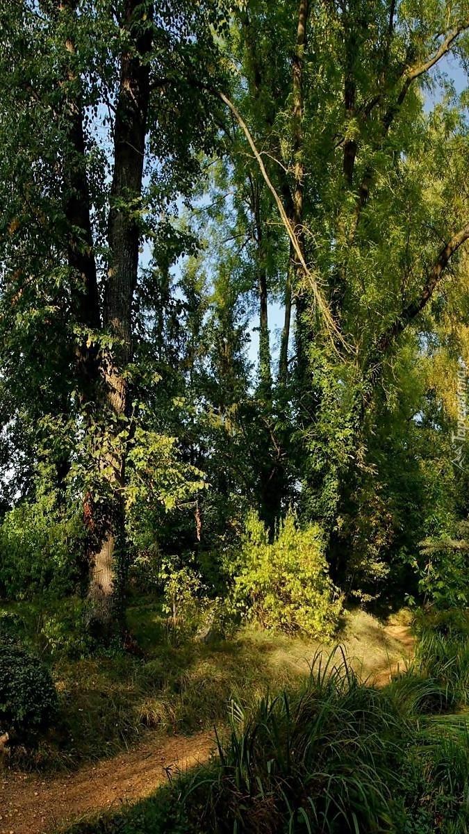 Las w blasku słońca