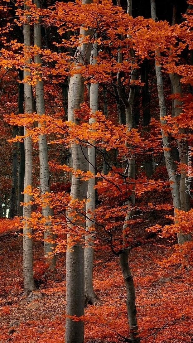 Las w brązowych barwach
