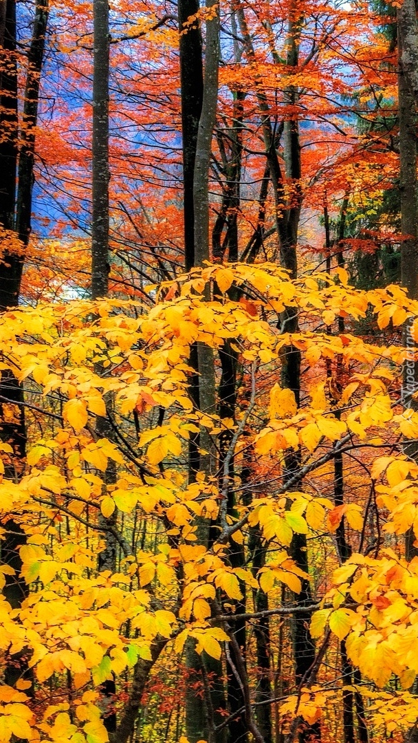 Las w jesiennej szacie