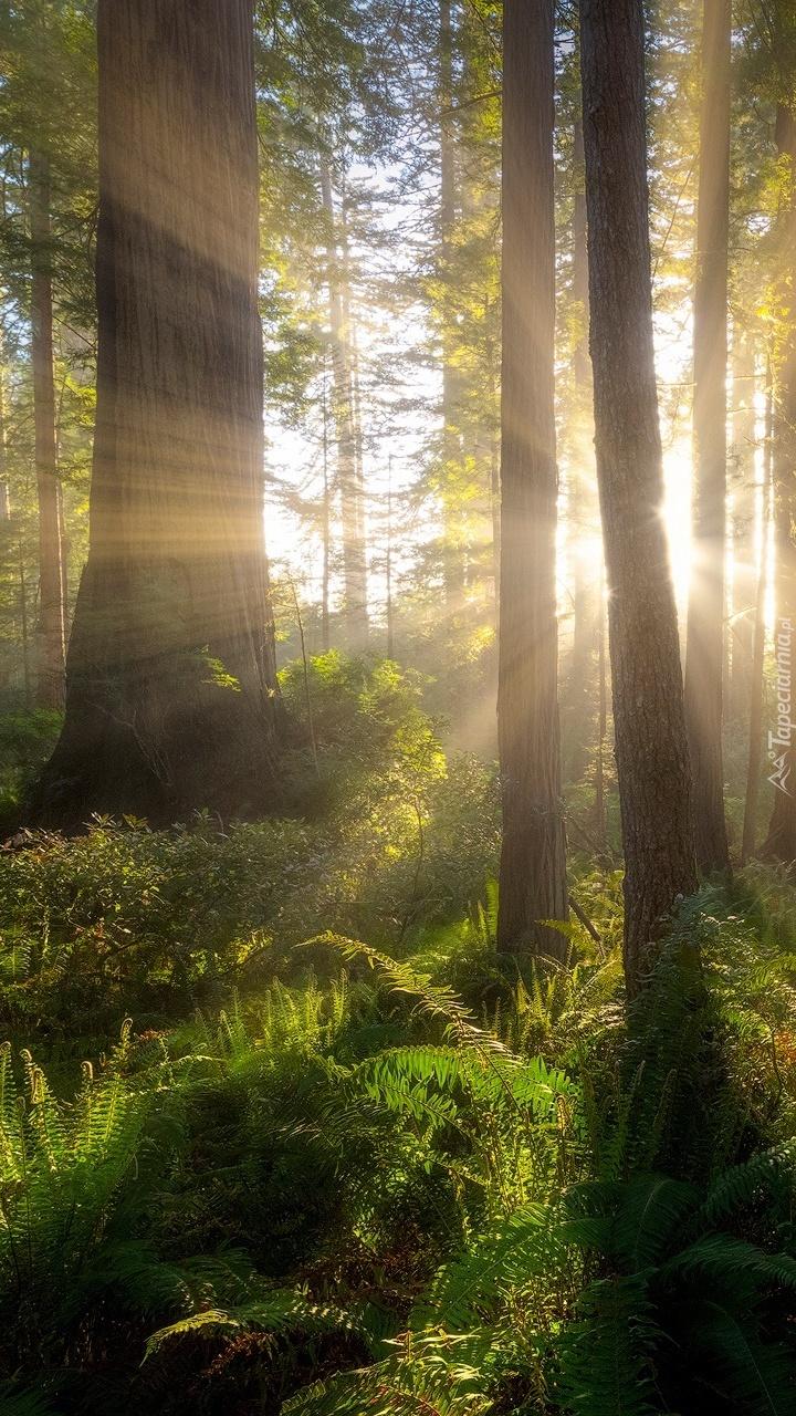 Las w promieniach słońca