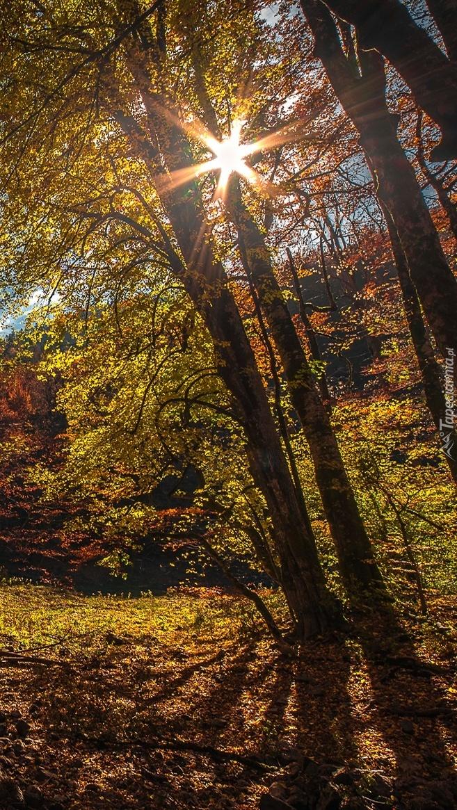 Las w promieniach słońca jesienią