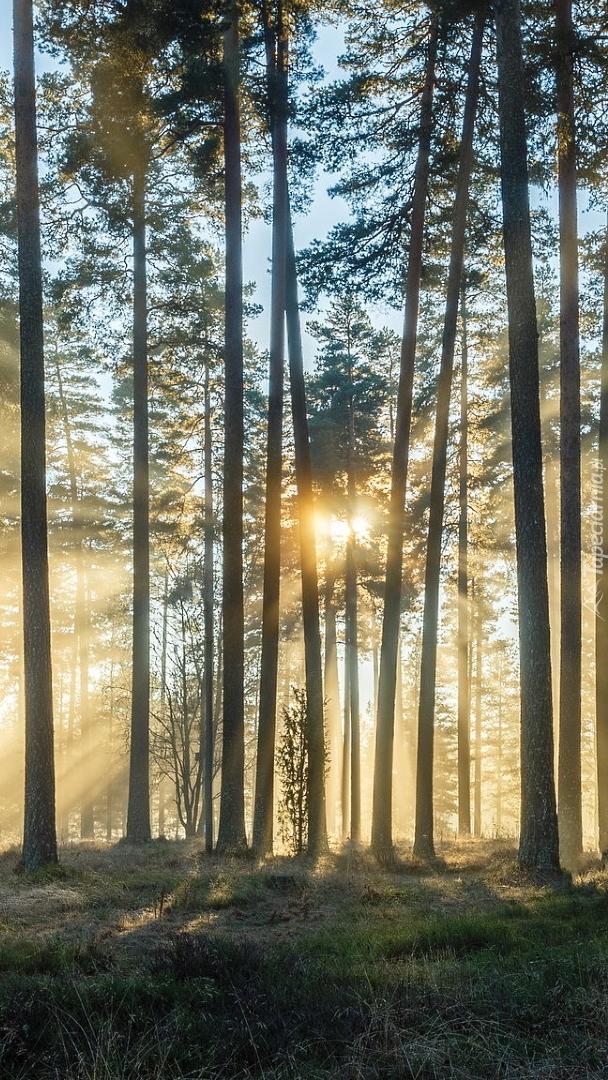 Las w słonecznych promieniach