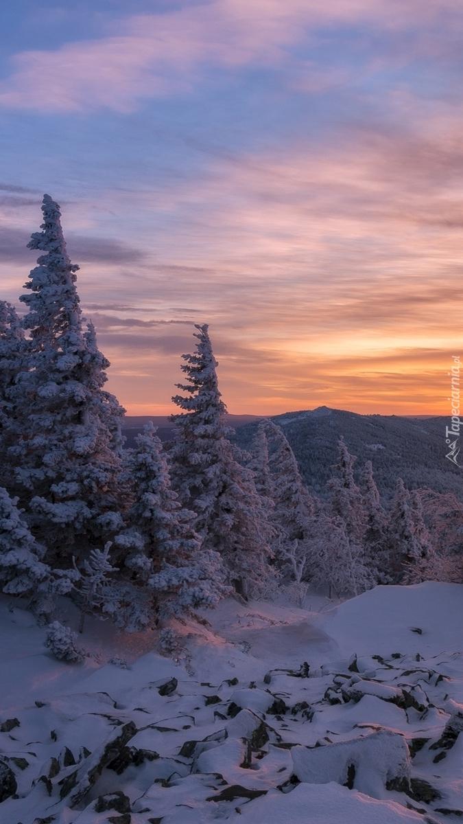 Las w śniegu