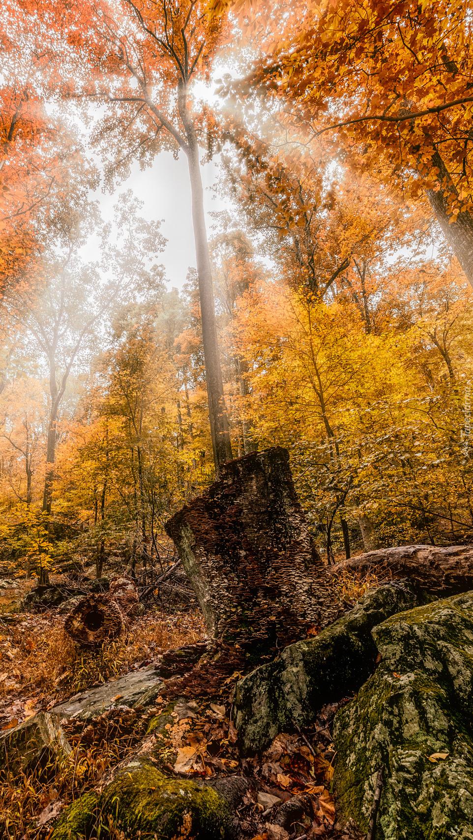 Las w świetle