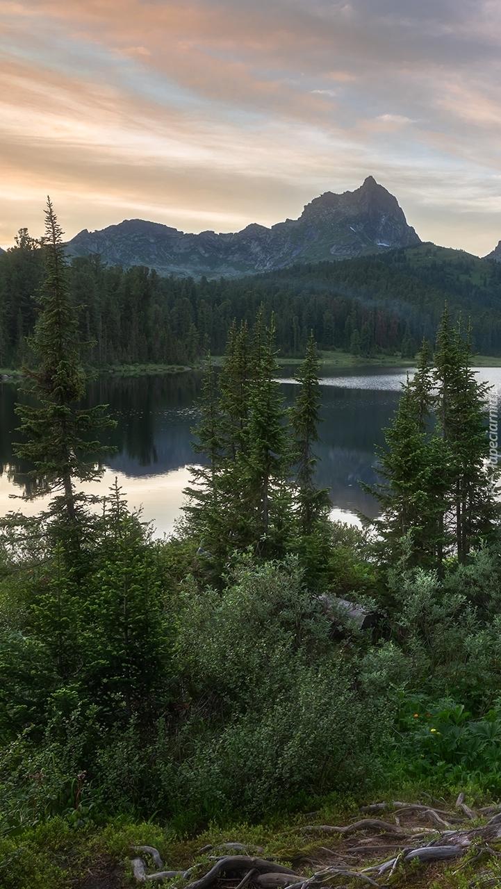 Las wokół górskiego jeziora