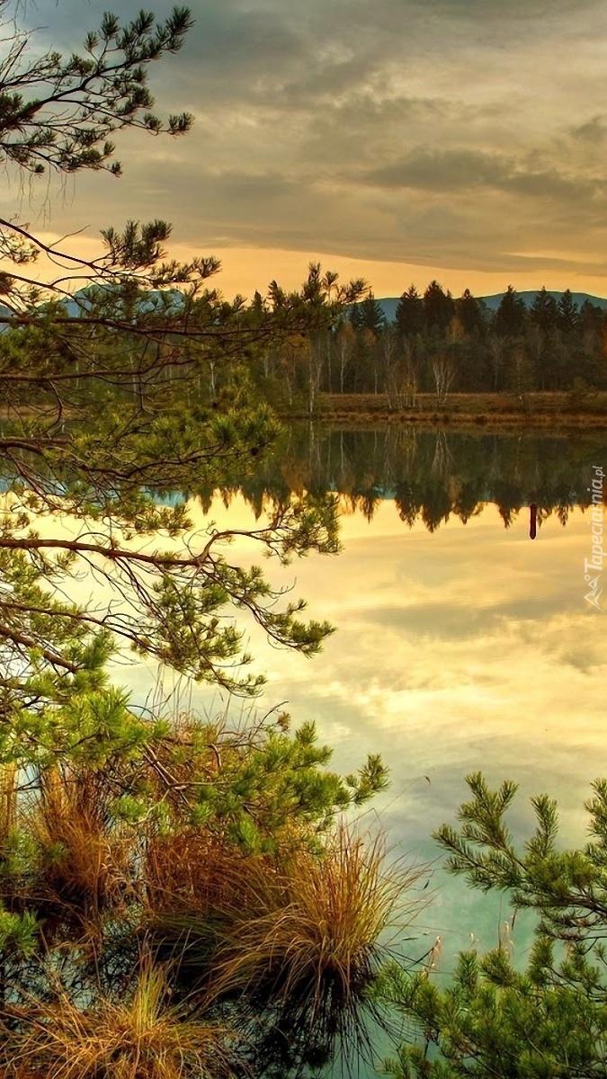 Las z jeziorem o zachodzie słońca