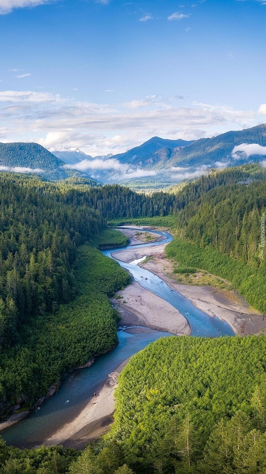 Lasy wzdłuż rzeki Elwha River