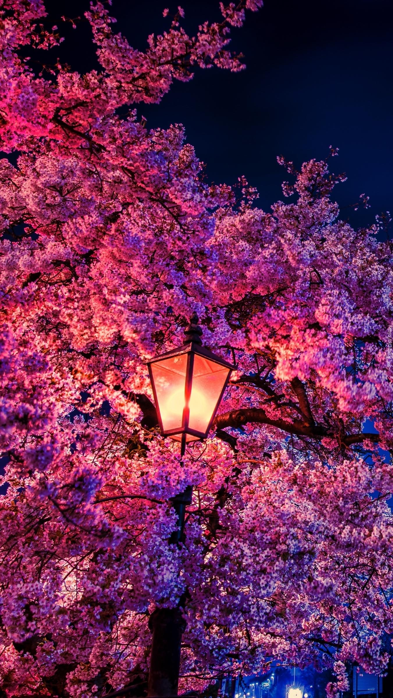 Latarnia na tle kwitnącego drzewa