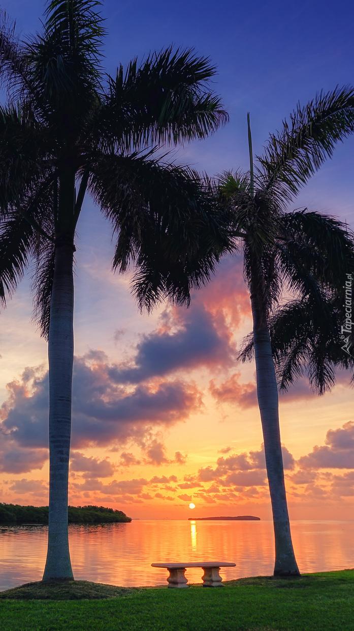Ławeczka pod palmami