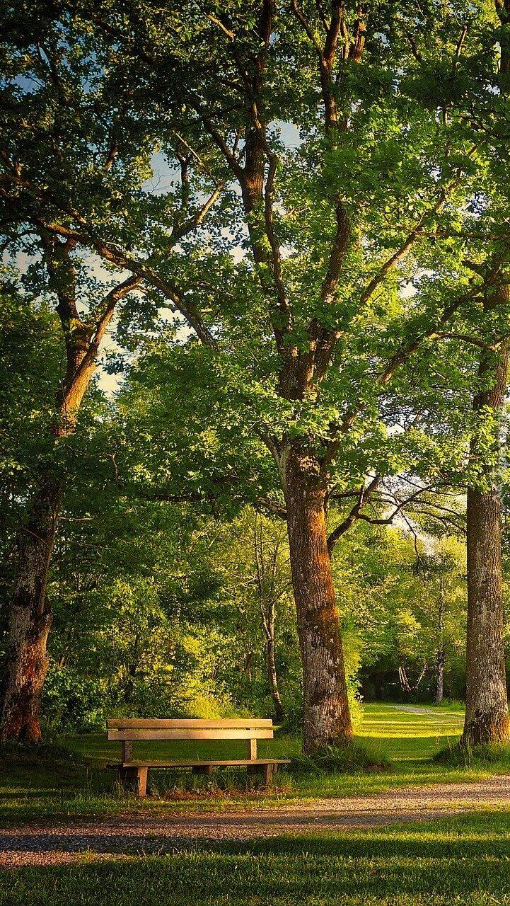 Ławka pod drzewami w parku