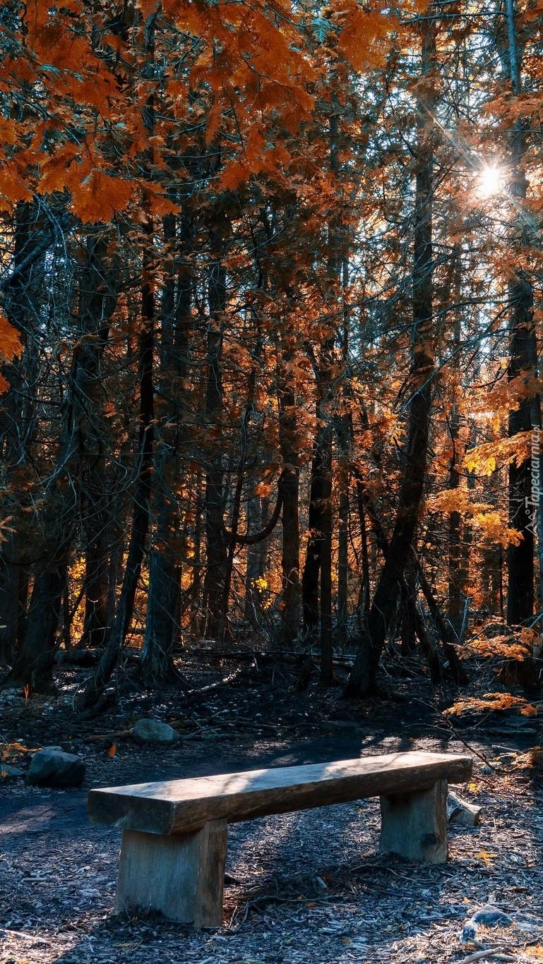 Ławka pod drzewami