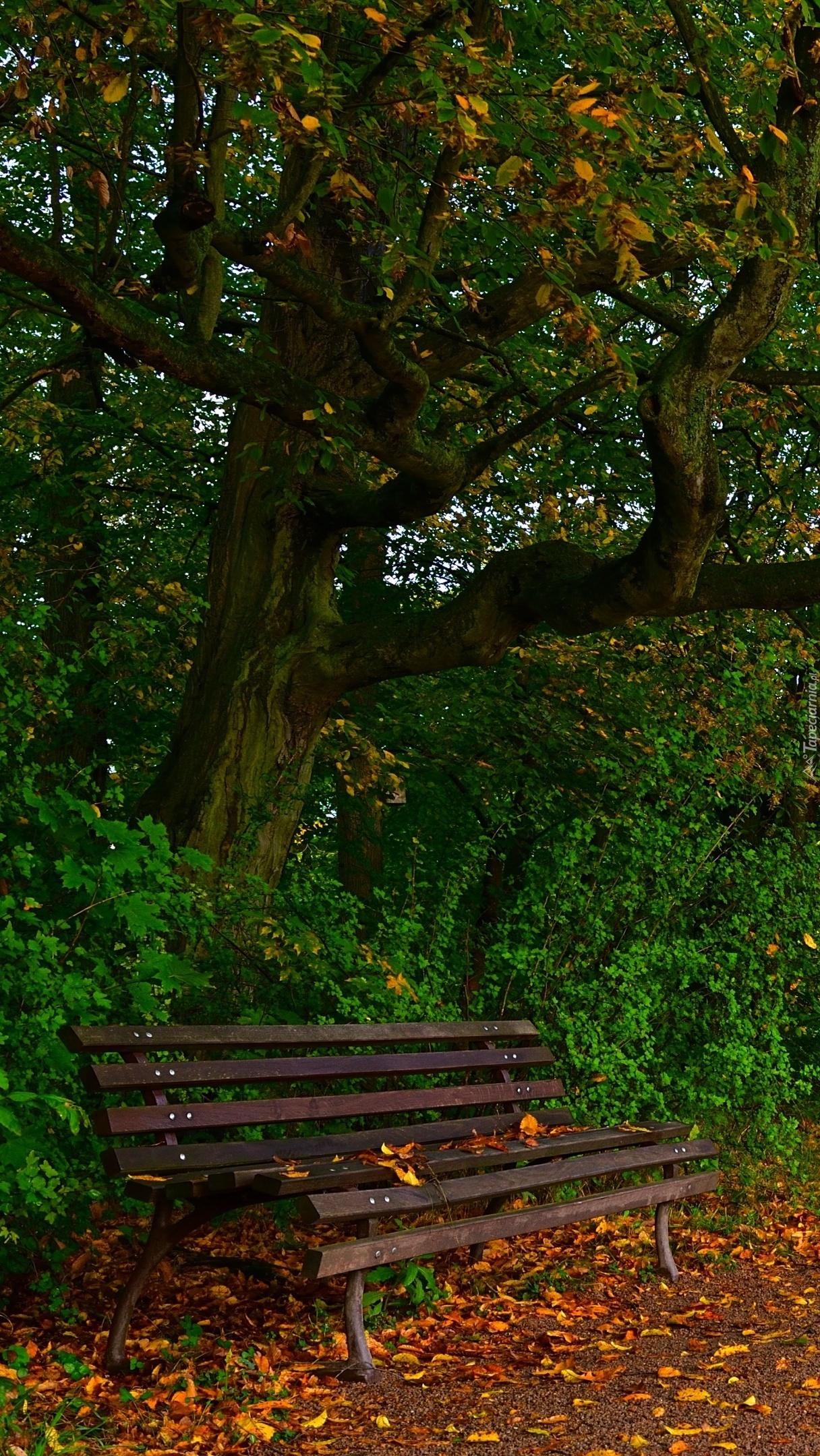 Ławka pod drzewem
