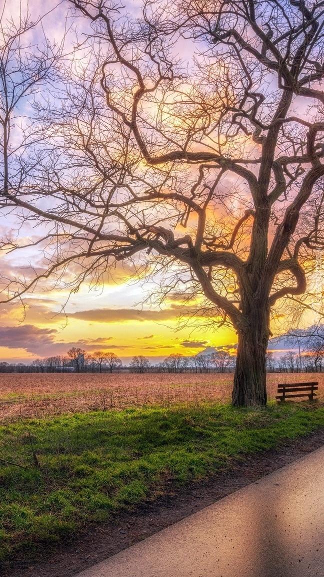 Ławka pod drzewem o wschodzie słońca