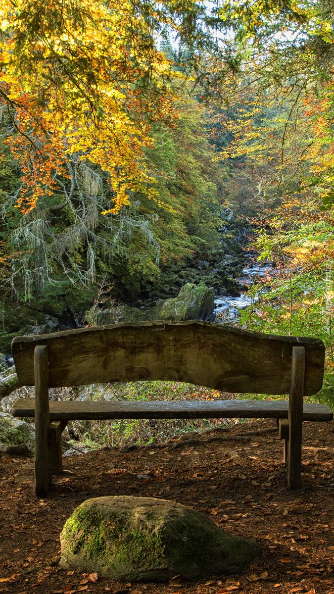 Ławka pod jesiennymi drzewami