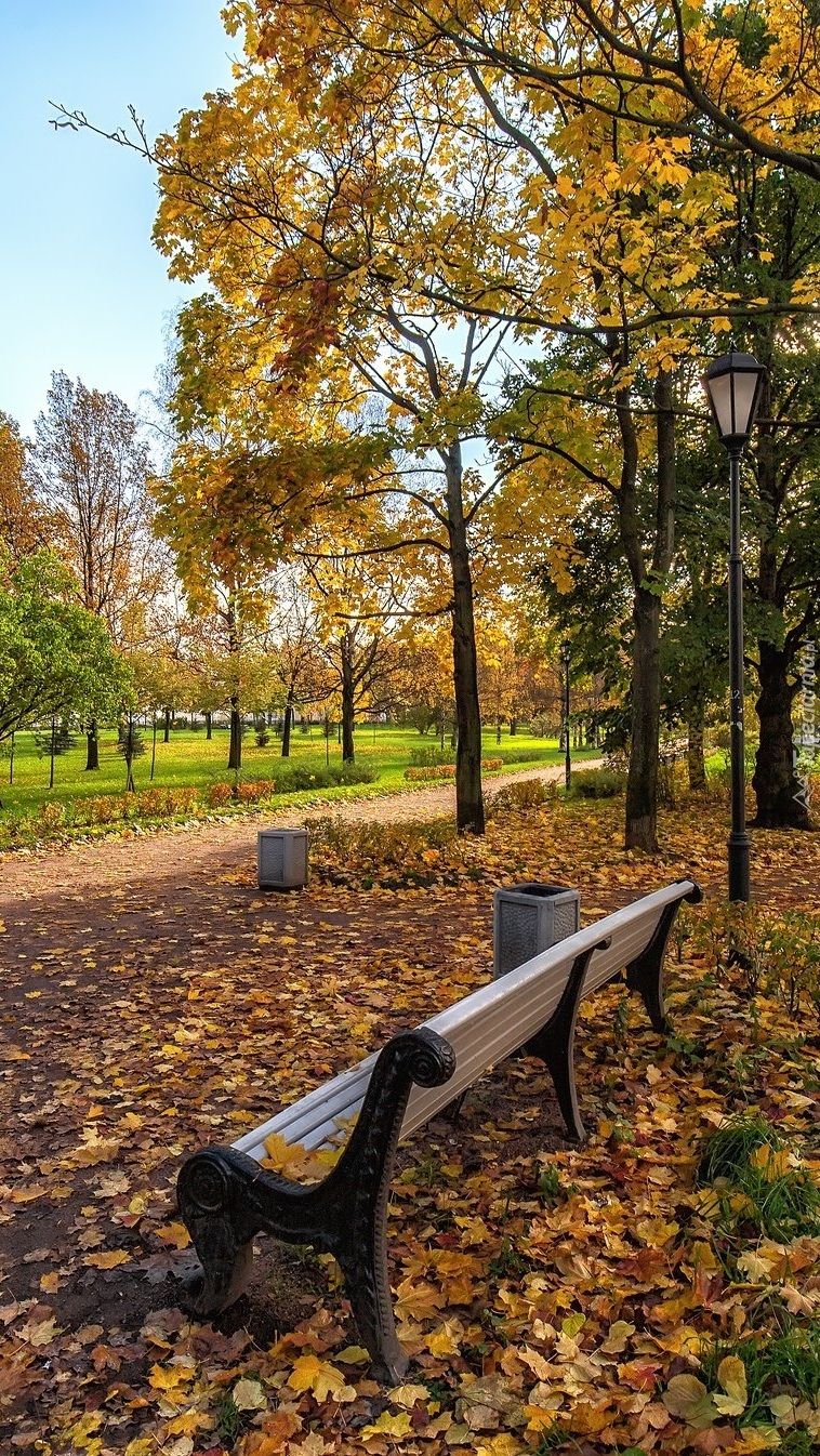 Ławka w jesiennym parku