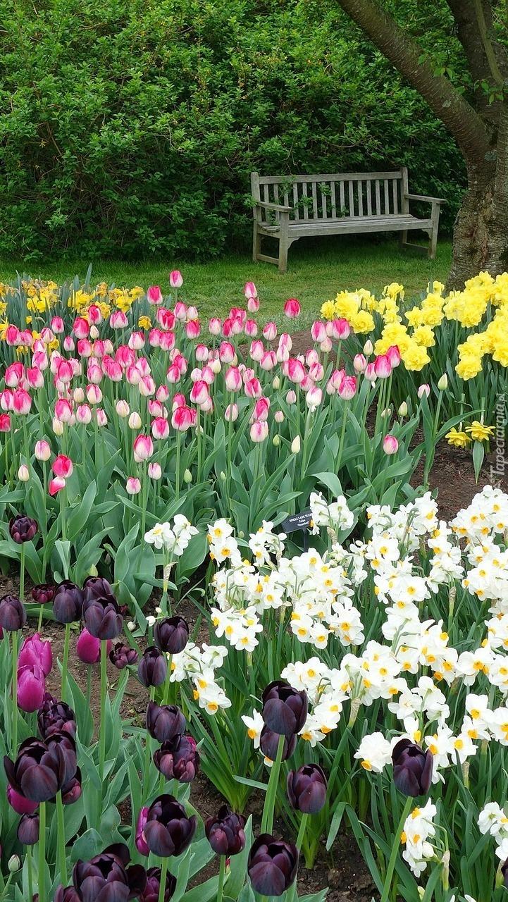 Ławka w parku obok wiosennych kwiatów