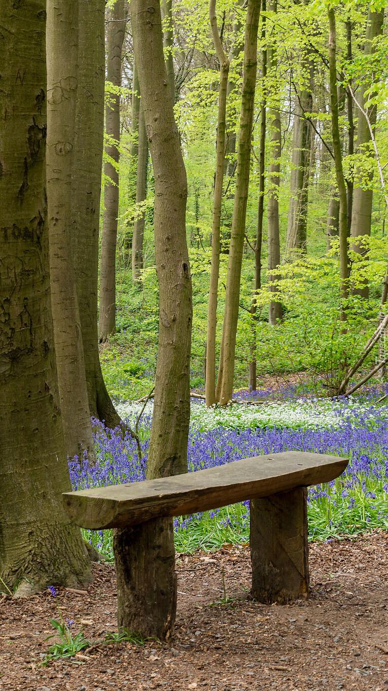 Ławka w wiosennym lesie