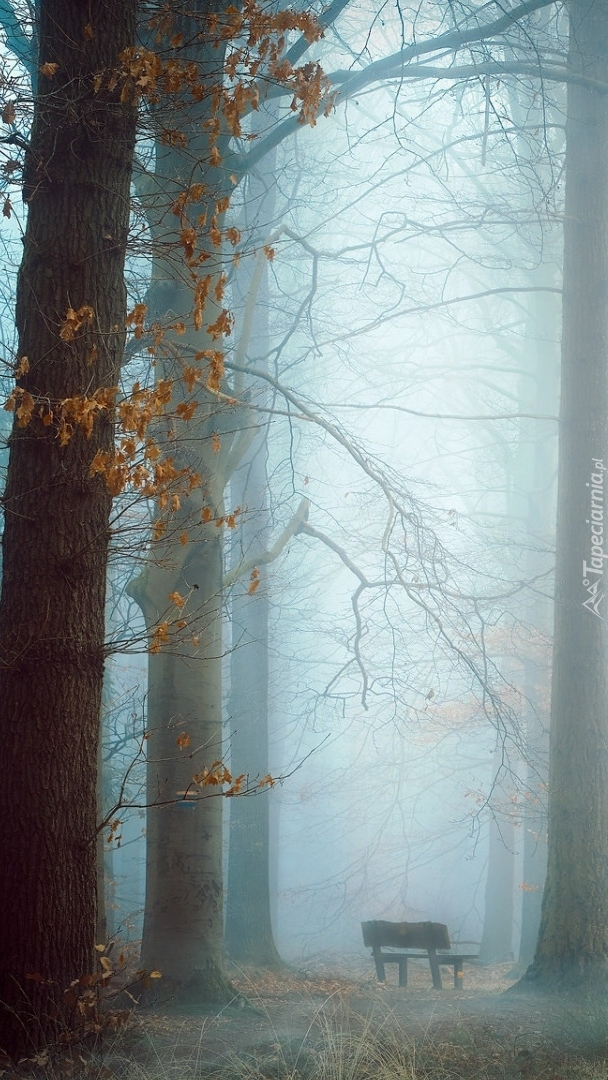 Ławka w zamglonym lesie