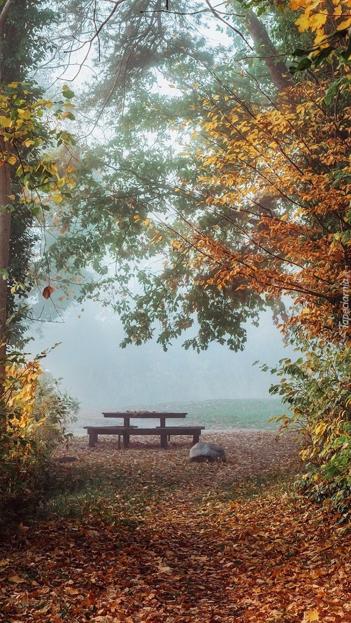 Ławka w zamglonym parku