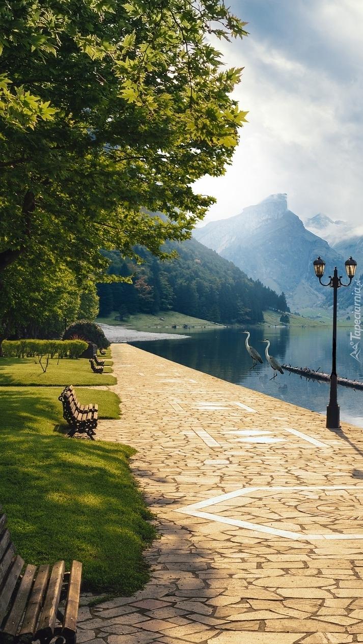 Ławki pod drzewami na chodniku obok jeziora