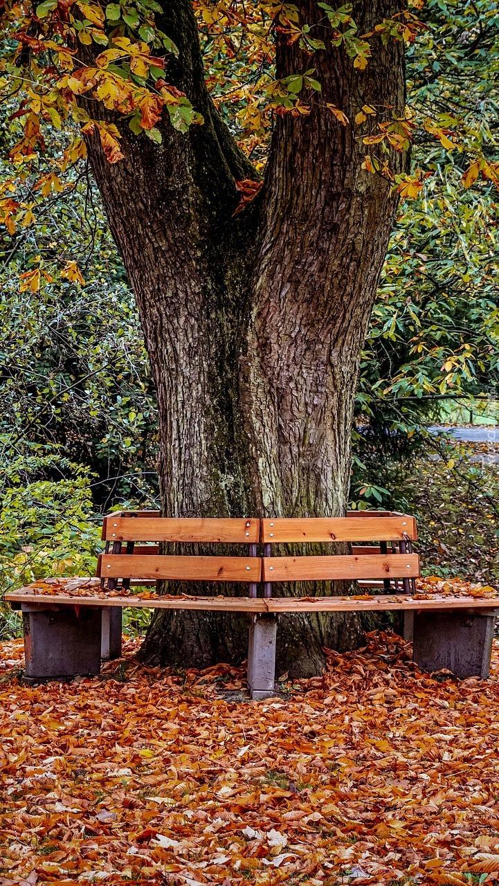 Ławki wokół drzewa