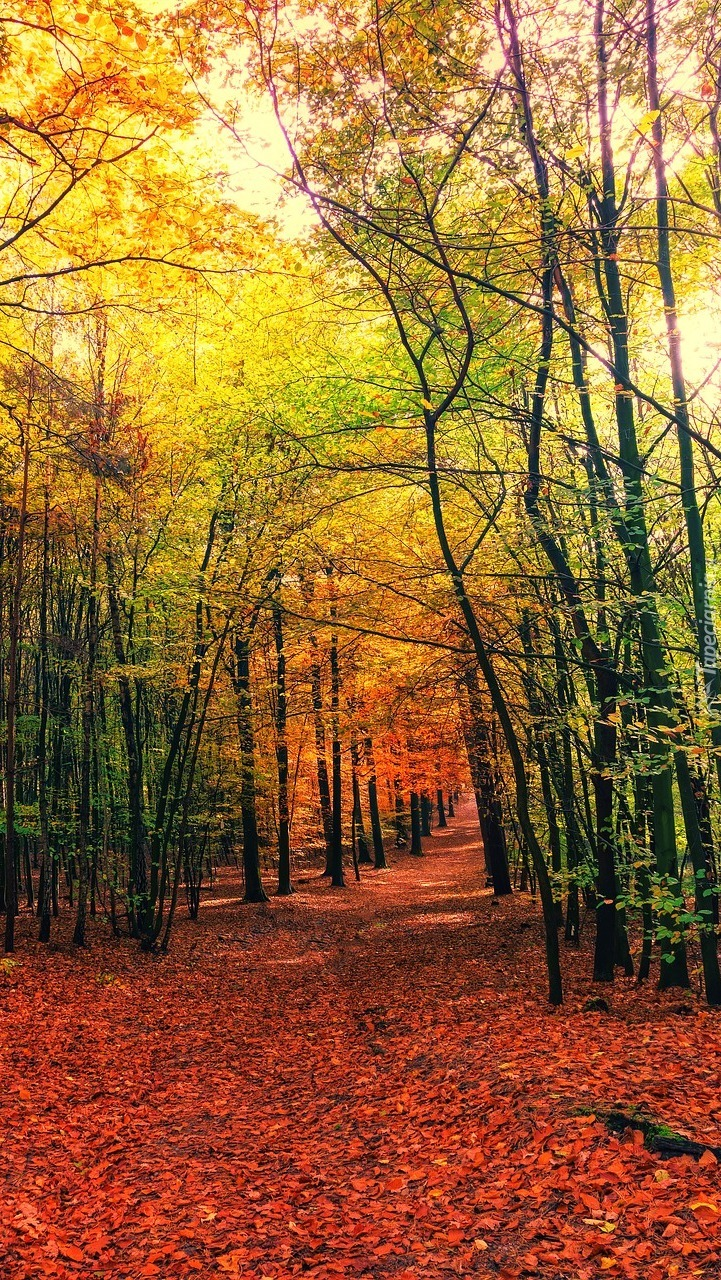 Leśna droga usłana liśćmi