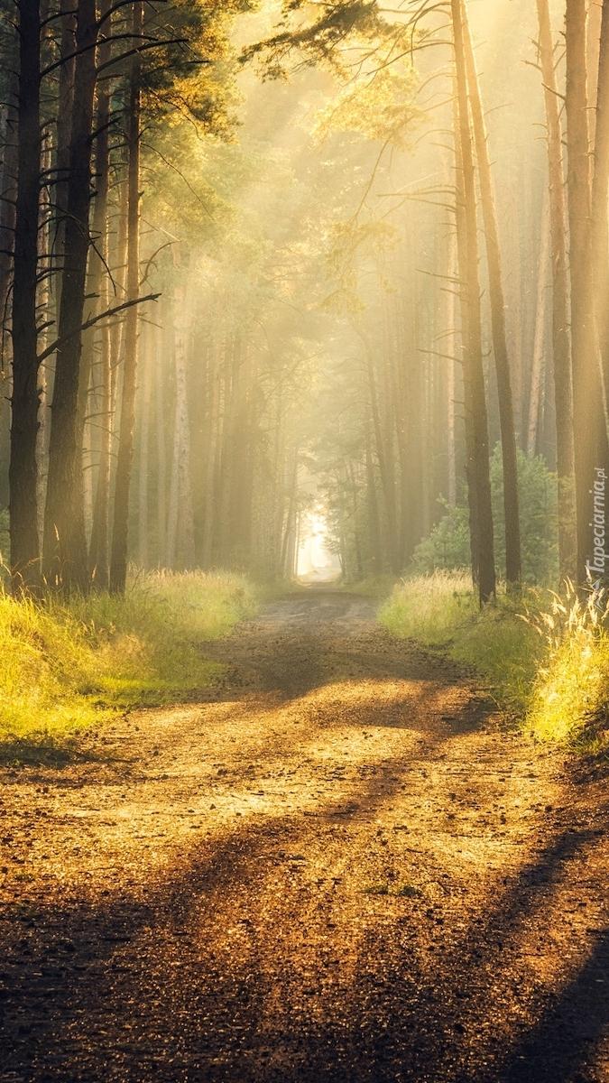 Leśna droga w promieniach słońca