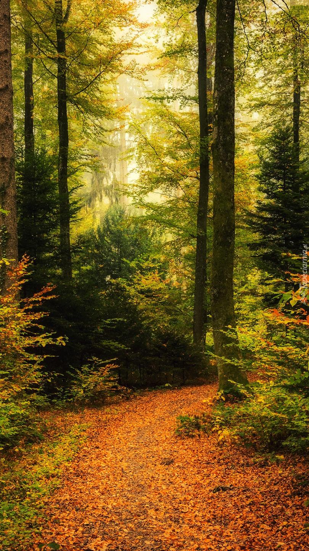 Leśna ścieżka usłana jesiennymi liśćmi