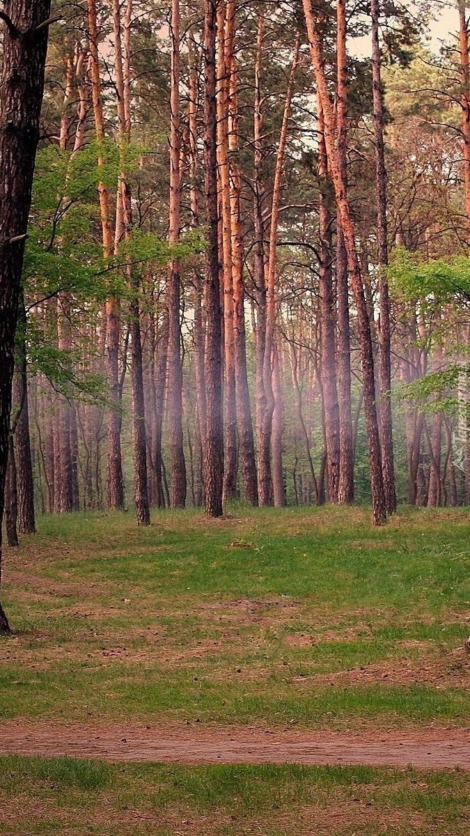 Leśna ścieżka