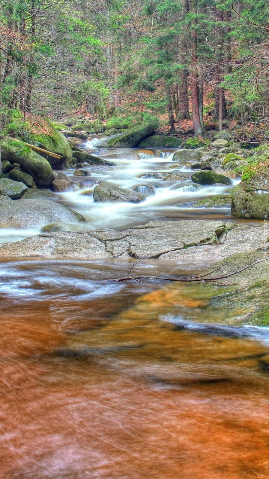 Leśna skalista rzeka