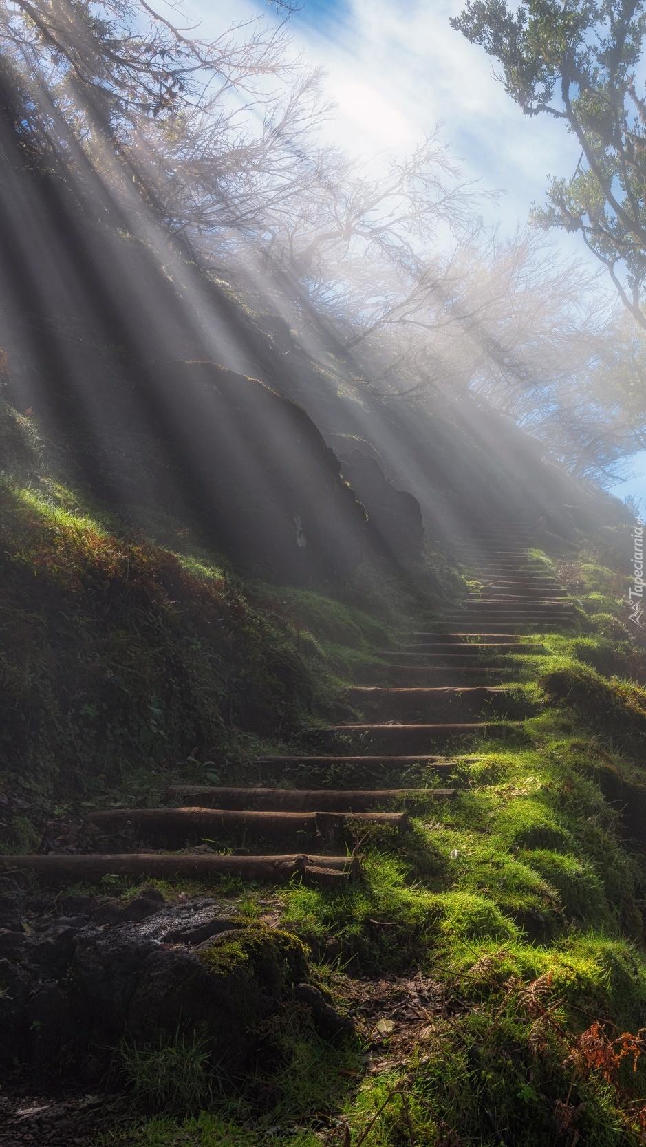 Leśne schody w mglisty poranek