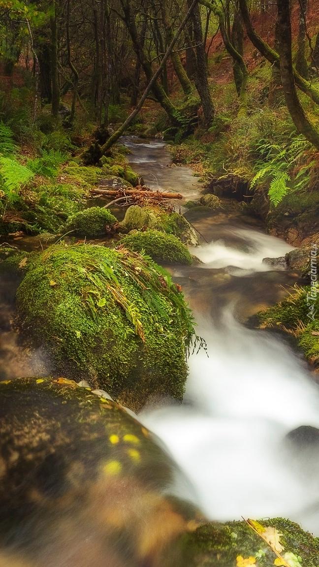 Leśny potok na omszałych kamieniach