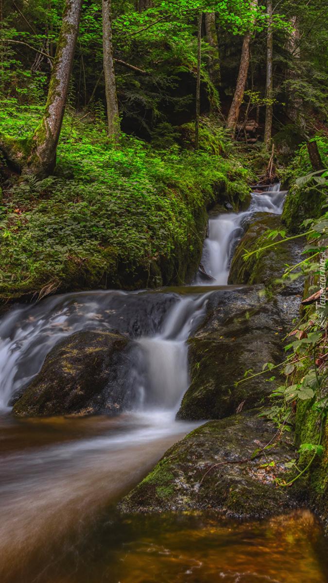 Leśny potok na skałach