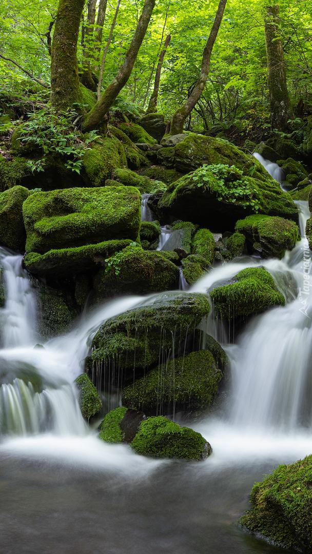 Leśny strumień na omszałych kamieniach
