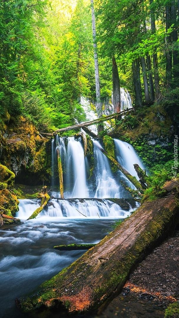 Leśny wodospad