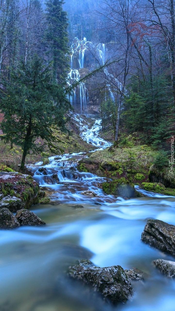 Leśny wodospad i rzeka