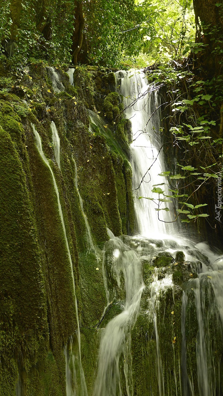 Leśny wodospad na omszałych skałach